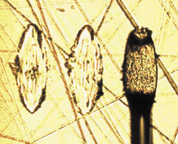 Внешний вид «вскрытых» зон микросварки