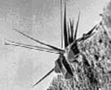 Пример «усов» олова при увеличении в 3000x